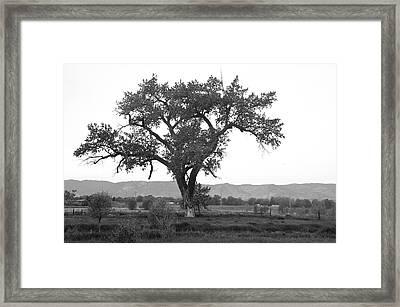 Goddess Tree 3 Framed Print by Matthew Angelo