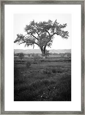 Goddess Tree Framed Print by Matthew Angelo