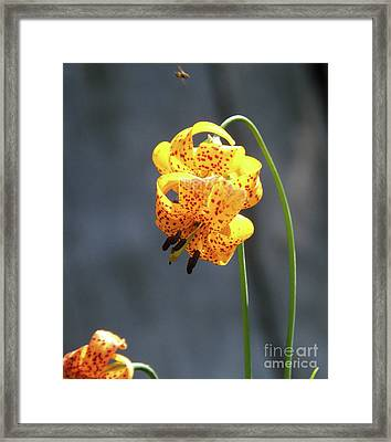 God's Classic Work In The Wilderness Framed Print