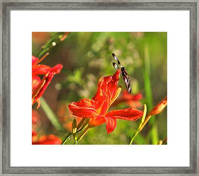 Gods Creation-14 Framed Print by Robert Pearson