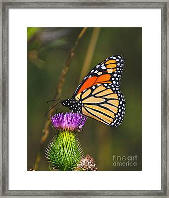 Gods Creation-16 Framed Print