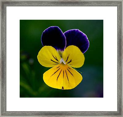 Gods Creation Framed Print by Robert Pearson