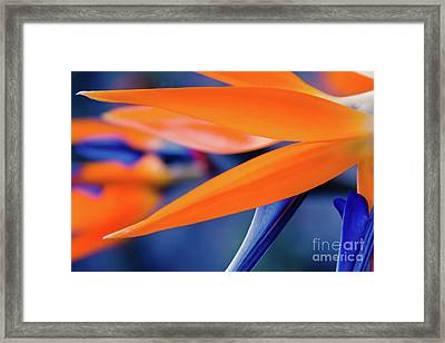 Framed Print featuring the photograph Gods Garden by Sharon Mau