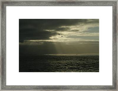 God's Gulls Framed Print by Michael Courtney