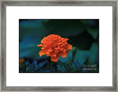 God's Radiance2 Framed Print by Terry Wallace
