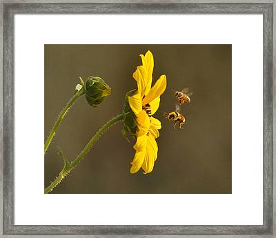 Framed Print featuring the photograph God's Work by Al Swasey