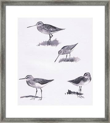 Godwits And Green Sandpipers Framed Print by Archibald Thorburn