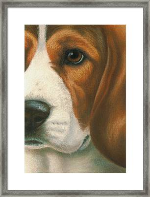 Goggie Beagle Framed Print by Karen Coombes