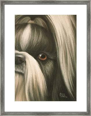 Goggie Shih Tzu Framed Print by Karen Coombes