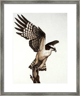 Going Fishin' Osprey Framed Print