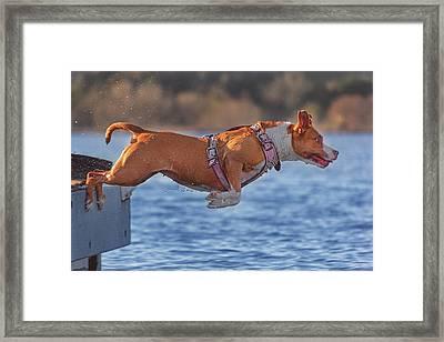 Going For A Swim  Framed Print