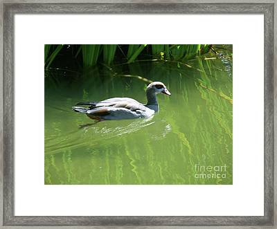 Going For A Swim Framed Print by Methune Hively
