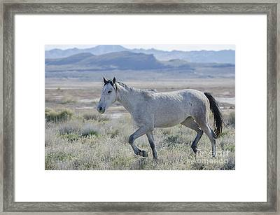 Going For A Walk Framed Print by Nicole Markmann Nelson