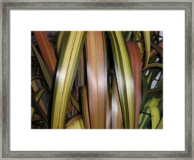 Going Native Framed Print by Sher Green