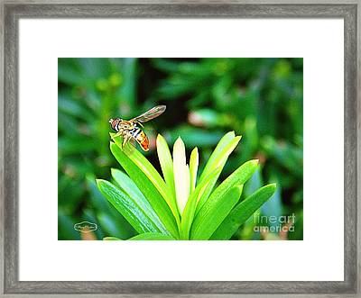 Going Out Framed Print