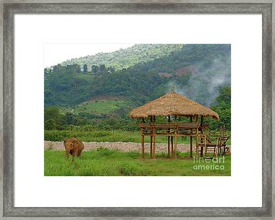 Going Solo Framed Print by Louise Fahy