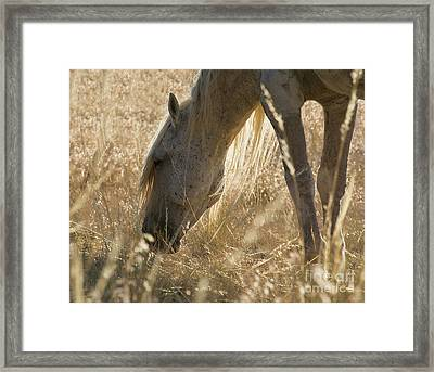 Going Through The Light Framed Print by Nicole Markmann Nelson