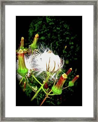 Going To Seed 4 Framed Print by Elizabeth Tillar