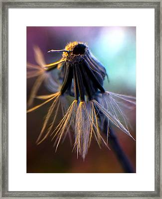 Going To Seed Framed Print by Kim Comeau