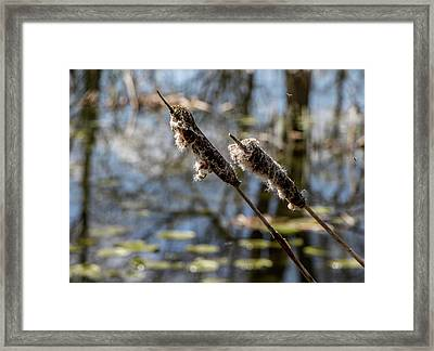 Framed Print featuring the photograph Going To Seed by Odd Jeppesen