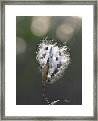 Going To Seed Framed Print by Valerie Lowing