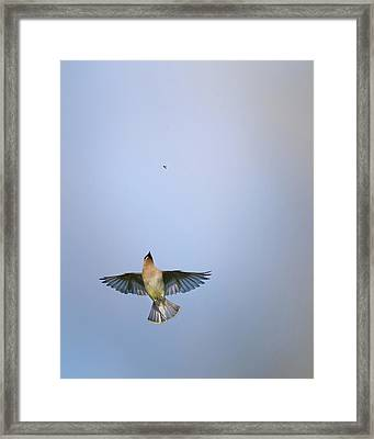 Going Up Framed Print by Bill Wakeley