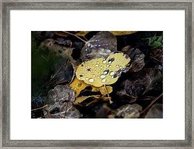 Gold And Diamons Framed Print