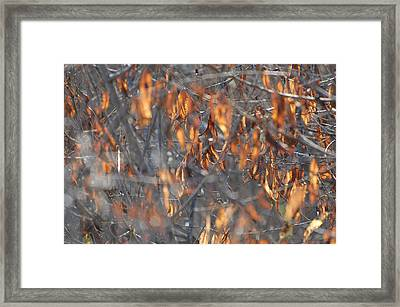 Gold And Grey Framed Print by Jean Booth