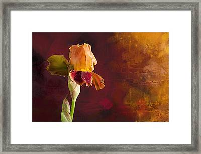 Gold And Red Iris Framed Print