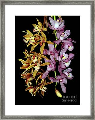 Gold And Red Orchid Display By Kaye Menner Framed Print