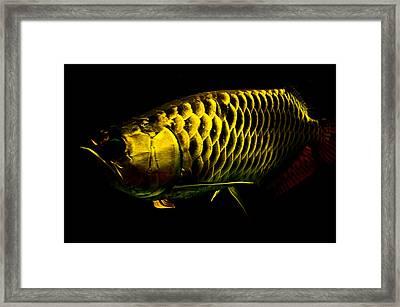 Gold Arowana01 Framed Print