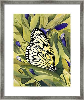 Gold Butterfly In Branson Framed Print