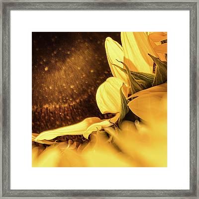 Gold Dust 2 - Framed Print