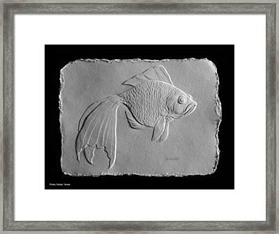 Gold Fish 1 Framed Print by Suhas Tavkar