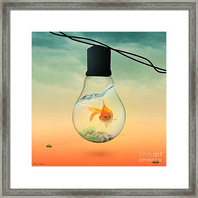Gold Fish 4 Framed Print by Mark Ashkenazi