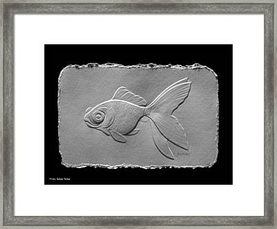 Gold Fish1a Framed Print