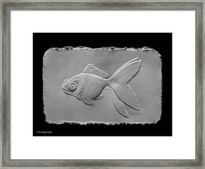 Gold Fish1a Framed Print by Suhas Tavkar