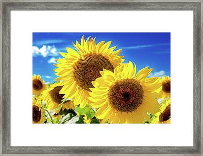 Framed Print featuring the photograph Gold by Greg Fortier