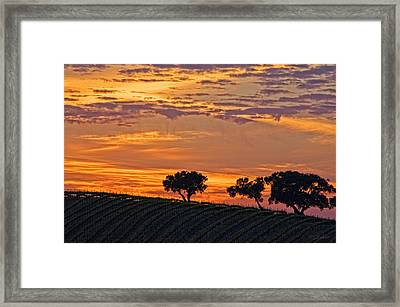 Gold Hills Framed Print