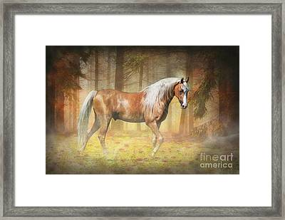 Gold In The Mist Framed Print by Michelle Wrighton