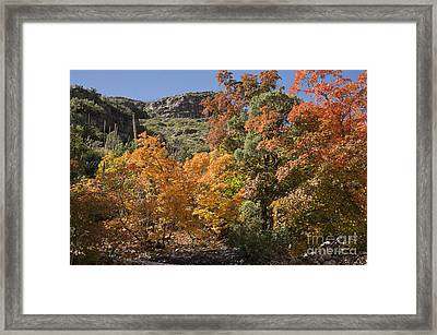 Gold In The Mountains Framed Print by Melany Sarafis