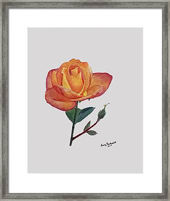 Gold Medal Rose Framed Print