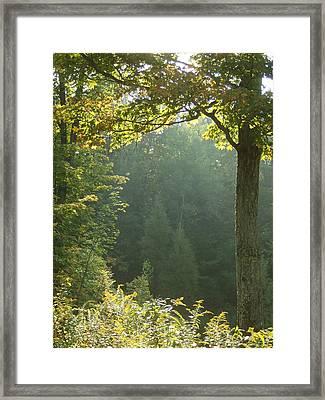 Gold On Green Framed Print