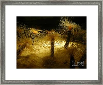 Gold Sea Anemones Framed Print