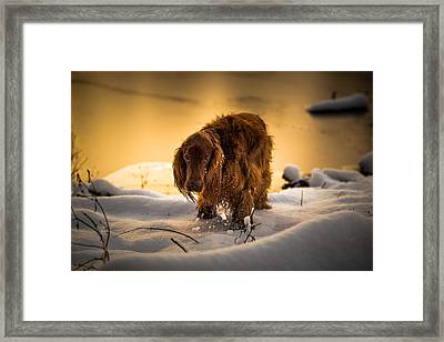 Gold, Silver And Bronze. Framed Print