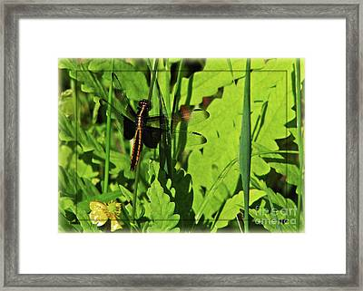 Gold Striped Dragron Framed Print by Deborah Johnson