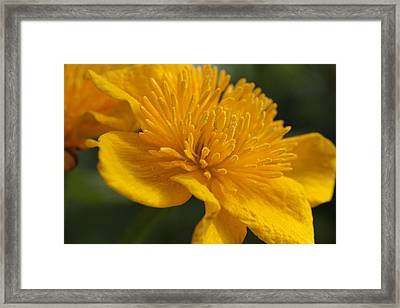 Gold Treasure  Framed Print by Connie Handscomb