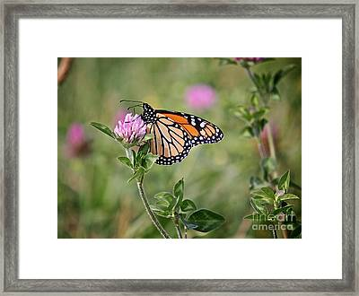Gold Wings Framed Print by Robert Pearson