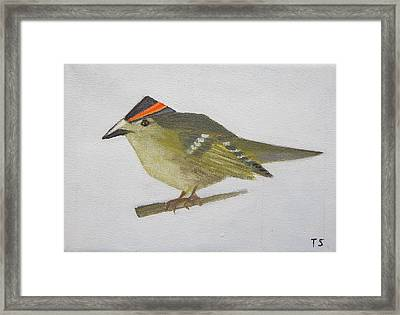 Goldcrest Framed Print
