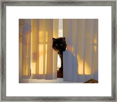 Golden Accents Framed Print by Cheryl Poland
